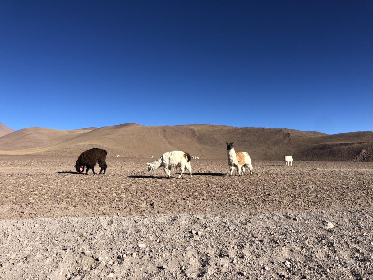 アタカマ砂漠9